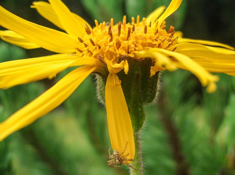Blumenwelt Erkunden Beim Kraeuterwandern