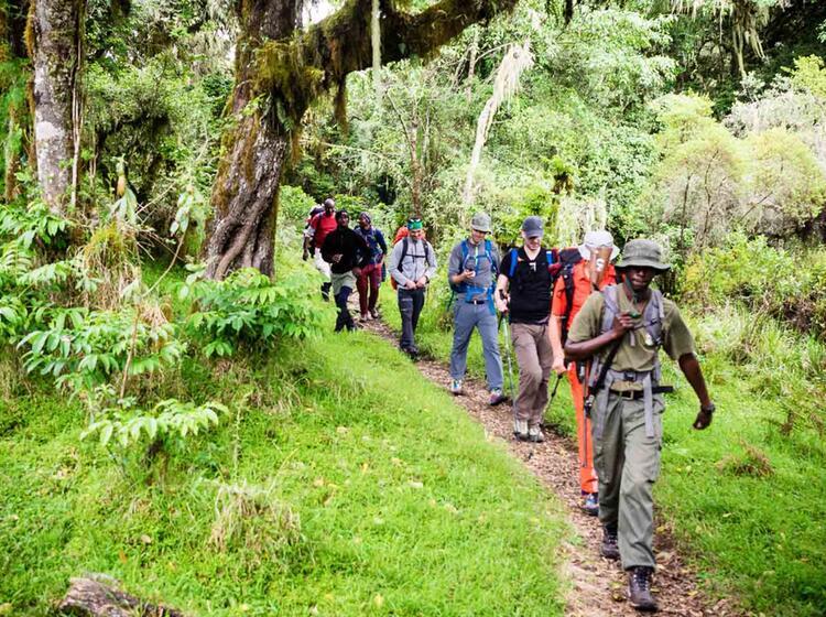 Dschungel Trekking Mit Fuehrer