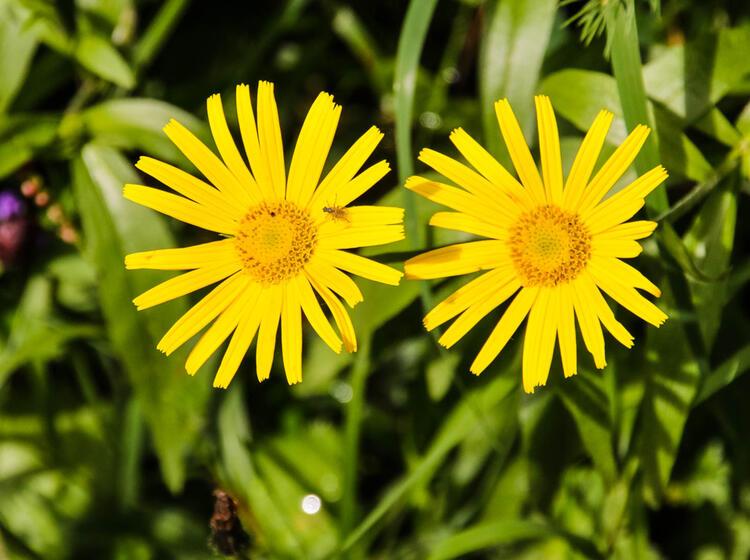 Flora Und Fauna Auf Der Gefuehrten Wanderung Vom Chiemsee Nach Berchtesgaden