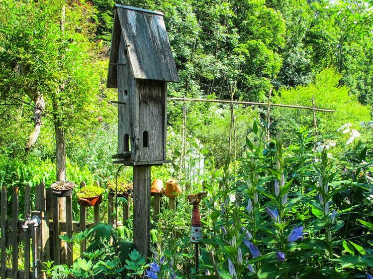 Garten Kraeuter Und Wandern