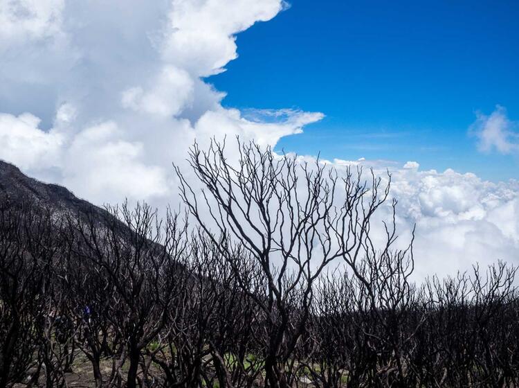 Kilimandscharo Trekking Tour Mit Deutschem Reiseleiter