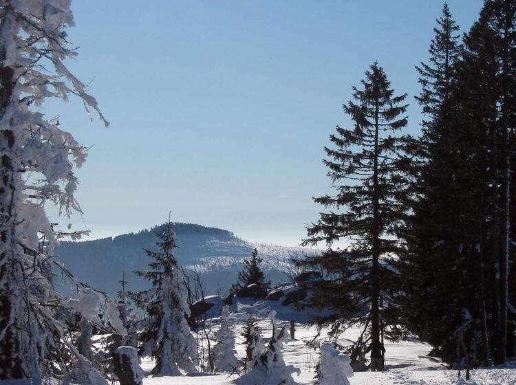 Schneeschuhwandern Bayrischer Wald Scheibensattel