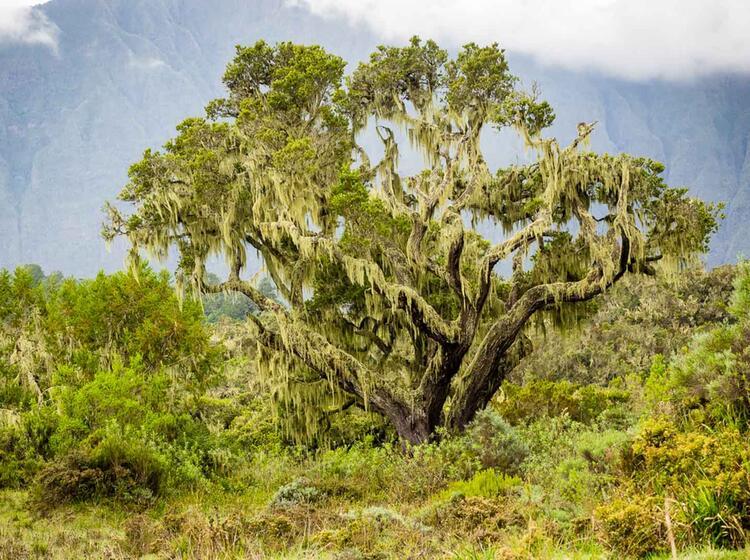 Trekking Im Urwald Auf Dem Weg Zum Kilimandscharo
