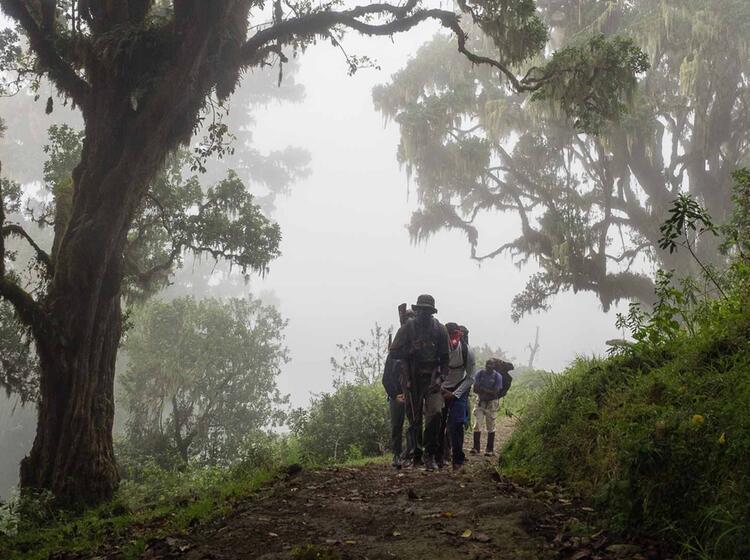Urwald Trekking Mit Fuehrer Am Kilimandscharo