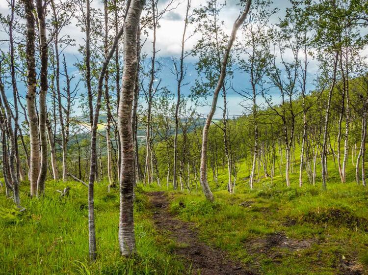 Wandern Oberhalb Des Polarkreis Im Lyngenfjord